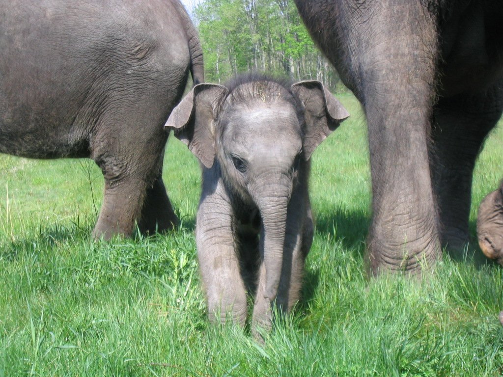 photo of baby elephant ~ harsterphoto of baby elephant