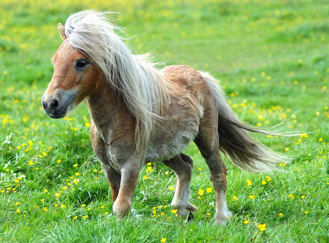 http://www.hedweb.com/animimag/cool-pony.jpg