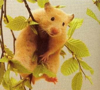http://www.hedweb.com/animimag/hamster-hotlink.jpg