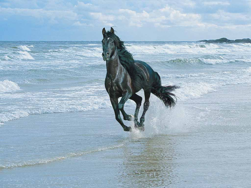 Black Horse Running On Beach