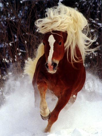 photo of hurrying horse