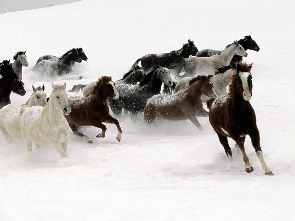 Amazing Wallpaper Horse Winter - horses-snow  HD_449721.jpg