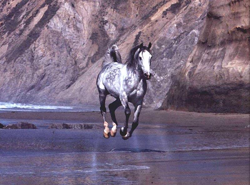 photo of wild horse