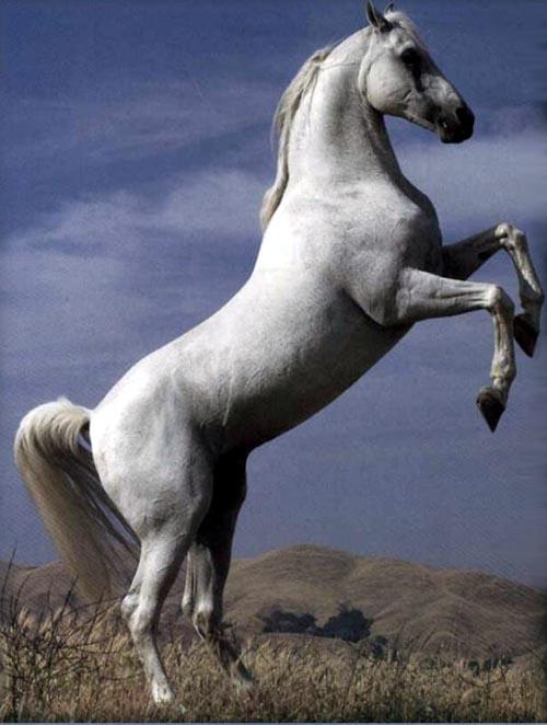photo of white stallion