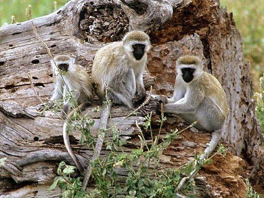 photograph of  monkeys