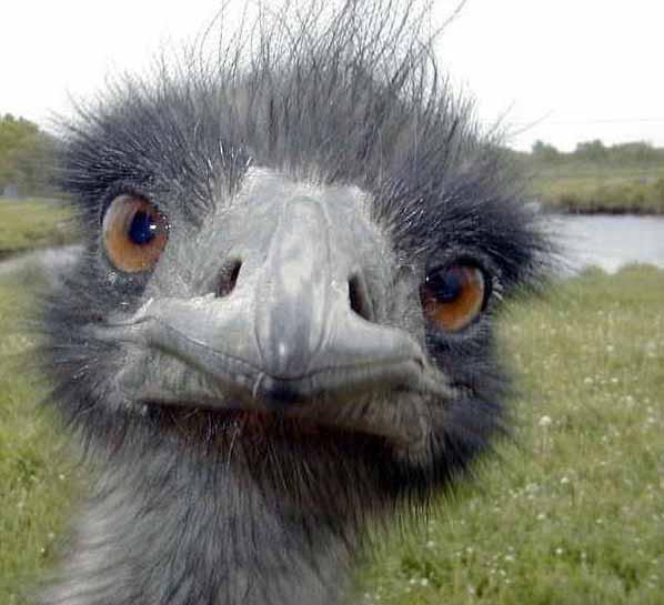 ostrich-head.jpg