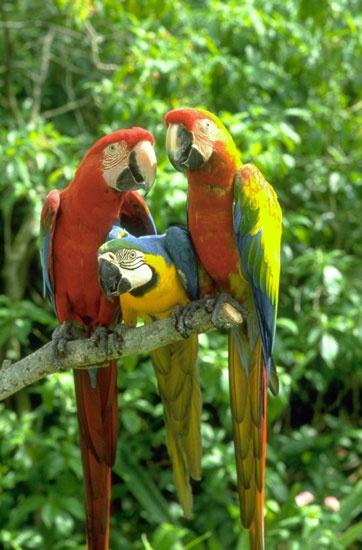 https://www.hedweb.com/animimag/parrot-hotlinks.jpg