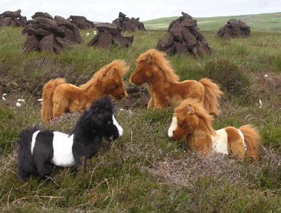 Show Me - Page 3 Peerie-ponies