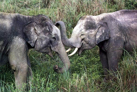 photo of elephants sniffing each other