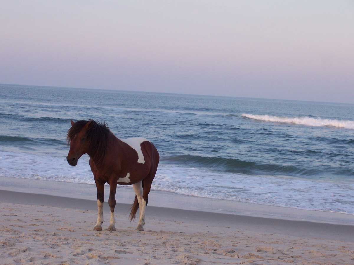 Horse and sea horse on the beach sciox Choice Image
