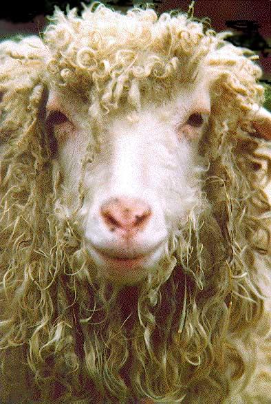 """Все это грустно.   """"Охота на овец  """", - на мой взгляд - худший ресторан города Киева."""