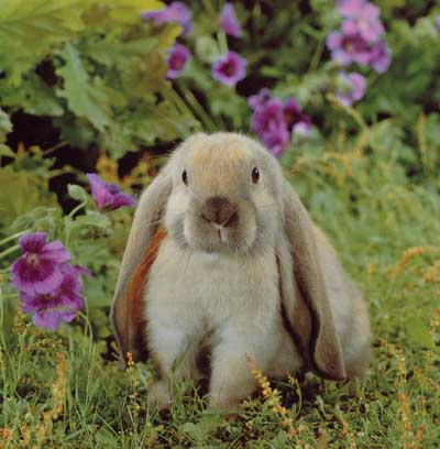 photograph of a rabbit