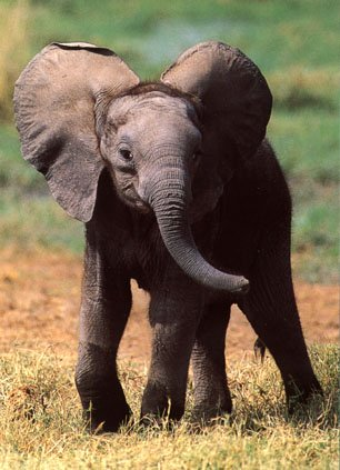 photo of two young elephants