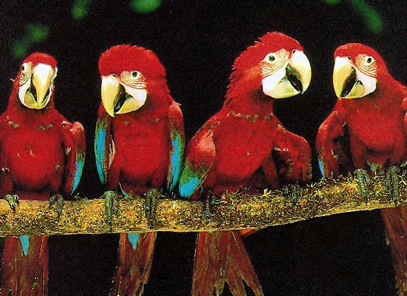 photo of some lively young parrots