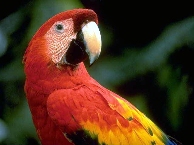 photograph of a cool macaw
