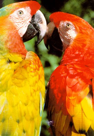 two young parrots