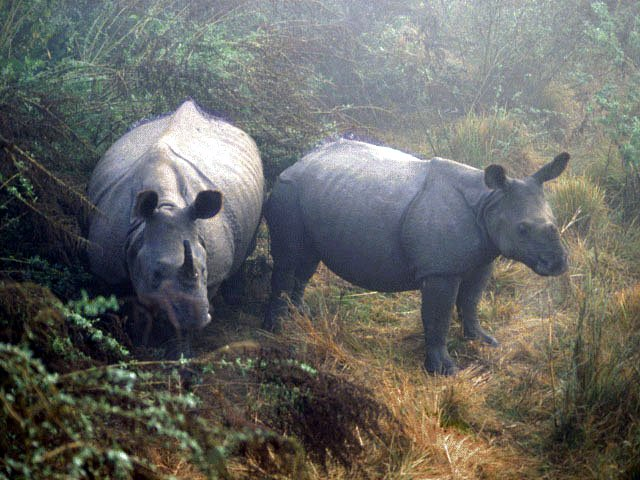 photo of rhinos in the mist